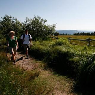 Wandern über die Grinden am Schliffkopf, Foto: Ulrike Klumpp