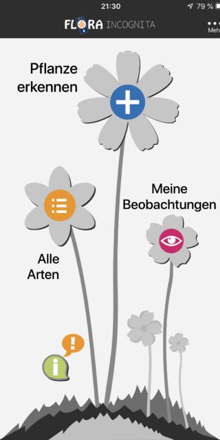 Die App Flora Incognita hilft bei der Pflanzenbestimmung; Foto: Flora Incognita