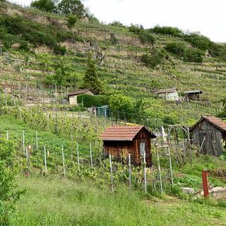 Sind schön anzusehen und tun dem Wein gut: Steillagen vor Heilbronn. Foto: Joachim Chwasczca