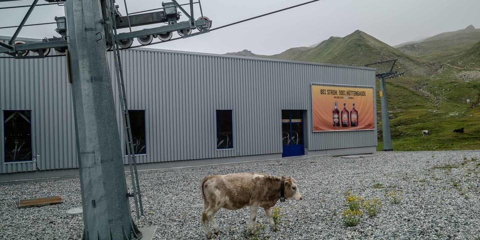 Alpinski-Stillleben mit Kuh. Foto: Axel Klemmer