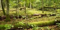 Auf einem vier Kilometer langen Weg vorbei an viel Totholz lernt man die Kernzone des Nationalparks kennen. Foto: Nadine Ormo