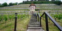 Freyburg an der Unstrut ist nicht nur Heimat des bekannten Rotkäppchen-Sektes. Inzwischen gibt eine Reihe ausgezeichneter junger Winzer an Saale und Unstrut, die auf relativ kleinem Gebiet handverlesene Weine anbauen. Foto: Joachim Chwasczca