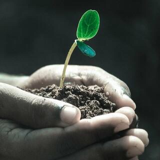 pixabay hände makro pflanze boden wachsen leben