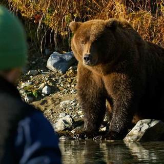 """Vortrag: """"Unter Bären - In der Wildnis Alaskas"""" Foto: David Bittner"""