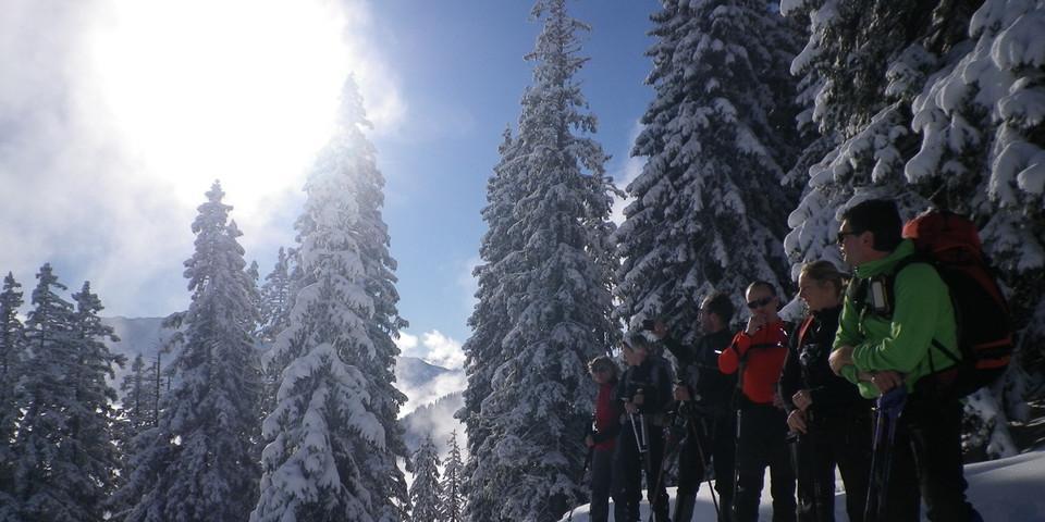 Der Traum aller Schneeschuhbergsteiger: Schnee, Sonne, schneebedeckte Bäume und nette Leute in der Gruppe. Foto: Thomas Krobbach