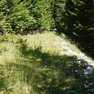 Überwucherte Forststraße - Aufgelassene Forststraßen im Hintergebirge sind innerhalb weniger Jahre überwuchert und der Wald greift von beiden Seiten zu. Foto: Georg Hohenester