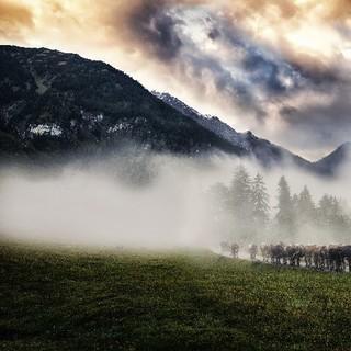 Viehscheid von Jonathan Besler