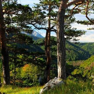 Hintergebirge - Im Hintergebirge kann sich der Wald wieder zur Waldwildnis entwickeln. Foto: NPK/Franz Sieghartsleitner