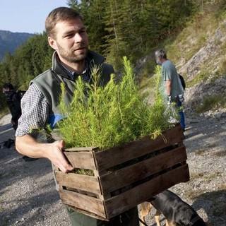 Ballenpflanzen zum Einpflanzen werden gebracht. - Der Förster bringt in einer Holzkiste Ballenpflanzen zum Einpflanzen.
