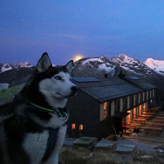 Ein Bild von einem Hund, Foto: Team Olperer Hütte
