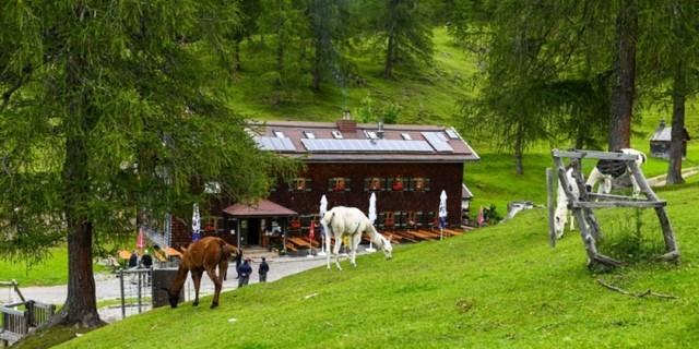 Viel Getier auf der Neuen Magdeburger Hütte, Foto: Daniel Liebl