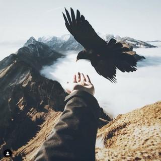 """Feeding Bird"", Aufnahme Andrin Owassapian, 2017 (instagram.com/andrin.owa). Copyright: Andrin Owassapian"