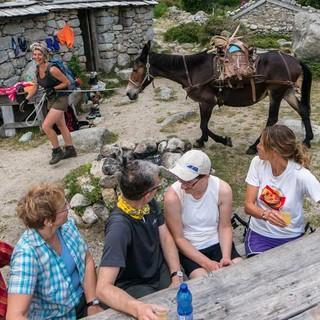 Leben wie im Freilichtmuseum auf der Bergeries d'Asinau. Alte Stallungen dienen heute als Unterkunft für müde Wanderer. Das Maultier ermöglicht die Versorgung auf der Hütte.