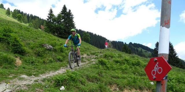 Tag 2, die Abfahrt vom Schreiberesattel über Alpe Wildmoos nach Bezau folgt stellenweise auf einem Singletrail.