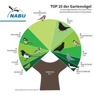 2017 wurde der Haussperling am häufigsten in deutschen Gärten gesichtet. Quelle: NABU