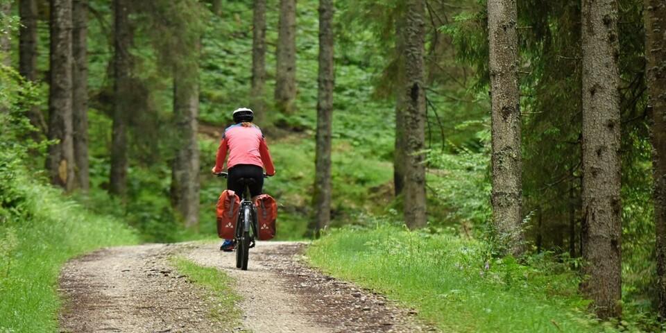 Die Ammergauer Alpen bescheren Radlern mit ihren Forstwegen eine stille Waldfahrt. Foto: Thorsten Brönner