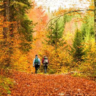 Der Herbst ist in den Wäldern besonders schön. Foto: Adobe Stock/zakaz86