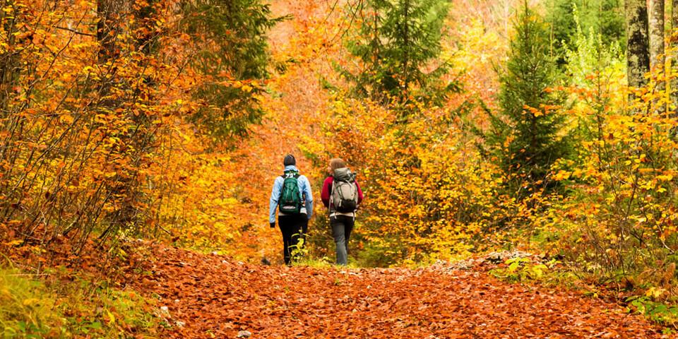 Nicht nur in den Alpen, auch in den deutschen Mittelgebirgen ist das Wanden im Herbst besonders schön. Foto: AdobeStock