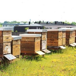 Kurze Lieferwege: Mitarbeitende können den auf dem Dach der Zentrale produzierten Honig in der Versicherungskammer-Kantine kaufen. Foto: VKB