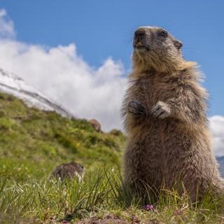 Wir müssen die Natur schützen, damit uns diese und viele weitere Alpenbewohner noch lange erhalten bleiben. Foto: DAV/Karl Seidl