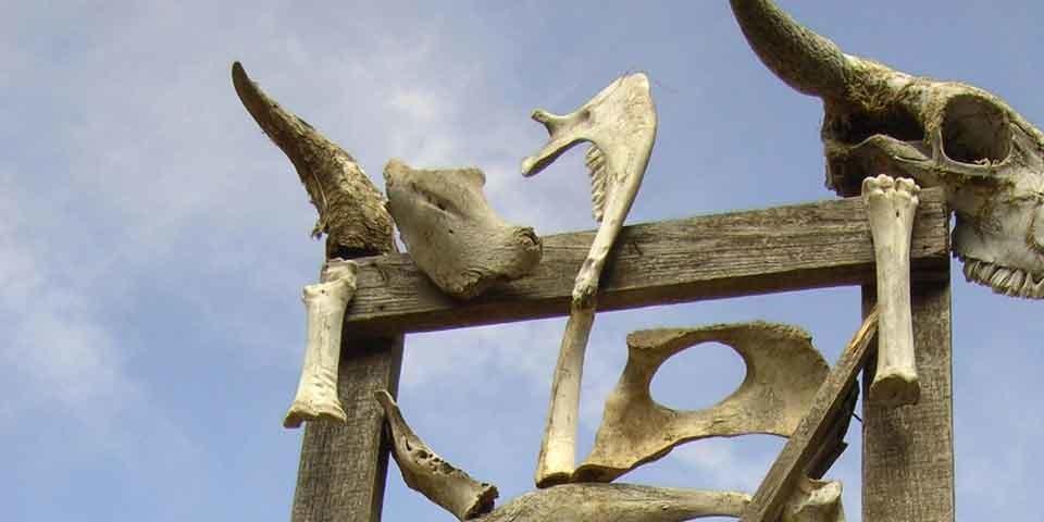 Landart aus Knochen, Foto: Monika Glasl, Sektion Tölz