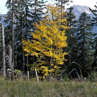 Bergwald in den Ammergauer Alpen, Foto: Jonas Kassner