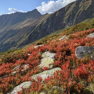 Der Bergherbst ist wie hier im Valsertal gerade besonders farbenfroh. Foto: DAV/ Pröttel