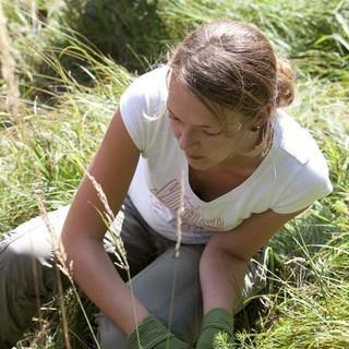 Ballenpflanze wird eingesetzt. - Eine Helferin setzt die Ballenpflanze ein.  &nbsp&#x3B;