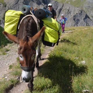 400 Kilo plus Gepäck - trotzdem bewegt sich Billy souverän durchs Gebirge. Foto: Solveig Michelsen