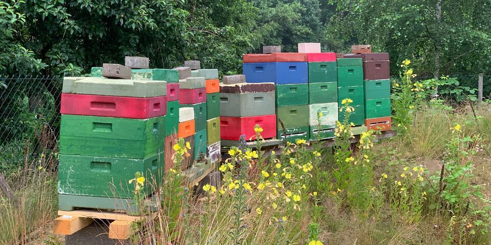 Bienenvölker unterstützen SDG 15: Leben an Land. Foto: DAV Kletterzentrum Bremen