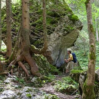 Weg zur Hesshütte - Unberührter Wald begleitet beim Aufstieg über den Unteren Koderboden zur Hesshütte. Foto: Iris Kürschner