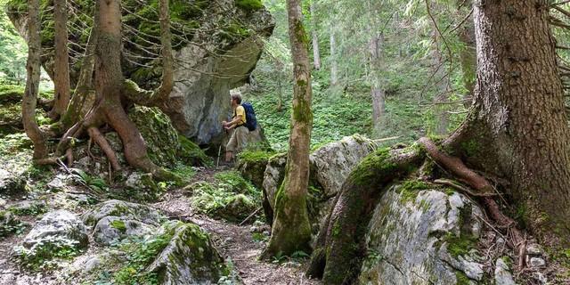Weg zur Hesshütte - Unberührter Wald begleitet beim Aufstieg über den Unteren Koderboden zur Hesshütte.