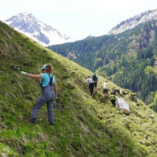 Sinnstiftende Arbeit auf der Alpe, Foto: Archiv Jubi Hindelang