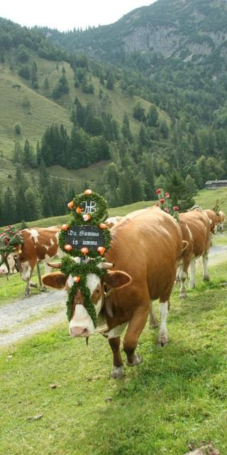 Almabtrieb auf der Königsalm. Foto: Alpenregion Tegernsee Schliersee