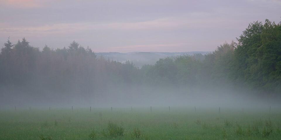 Morgenstimmung auf dem Natursteig Sieg. Foto: Klaus Gräbe