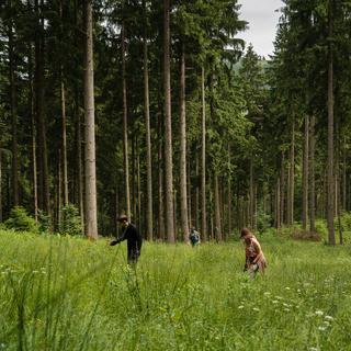 Bergwaldbewirtschaftung DAV Arvid Uhlig