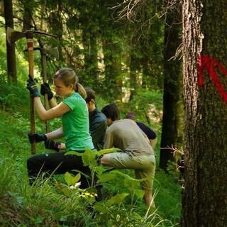 Wälder sind besonders gefährdet und brauchen entsprechende Pflege - Wie hier bei der Aktionschutzwald. Foto: DAV/Arvid Uhlig