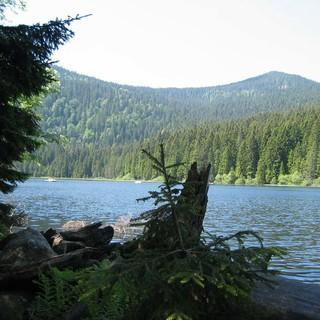 Am Arbersee im Bayerischen Wald, Foto: Friedel Frentrop (Essen)/pixelio.de