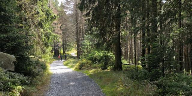 Wandern im Wald – es muss ja nicht immer Aussicht sein. Foto: Folkert Lenz