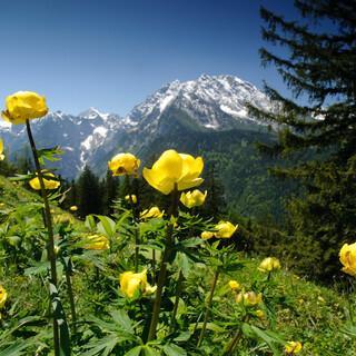 Heimat Natur Bergwiese mit Trollblumen-Nautilusfilm