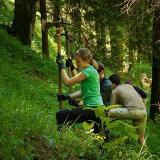 Aktion Schutzwald Foto: Arvid Uhlig