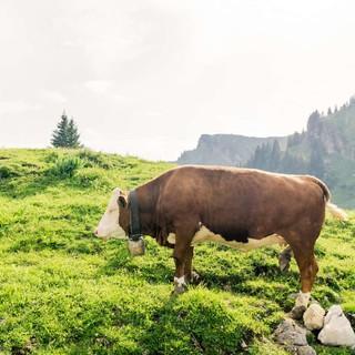 Besser nicht ärgern: 700-Kilo-Kaliber. Foto DAV/Hans Herbig