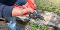 Profitipp vom Winzer: Eine Gartenschere mit drehbarem Griff ist unabdingbar fürs Reben schneiden. Foto: Joachim Chwasczca