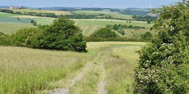 Die Wege über sanfte Hügellandschaften sind recht leicht. Foto: Günter Kromer