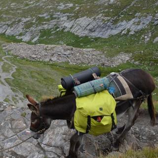 Mit einem Esel als Begleiter geht alles ein wenig langsamer. Foto: Solveig Michelsen