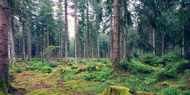 Märchenhafte Stimmung auf dem Westweg im Schwarzwald. Foto: Klaus Gräbe