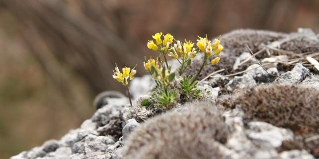 Pflanzen in großer Höhe sind besonders schutzbedürftig, Foto: DAV/Steffen Reich