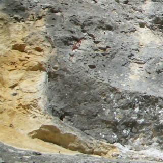 Kalk im Donautal mit Felsausbruch: Foto: DAV/Lindenthal
