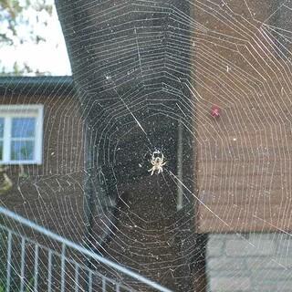 Spinnennetz, Foto: Jubi/Nico Löder
