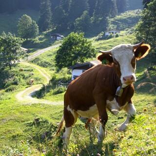Naturschutz bedeutet nicht das Ende der traditionellen Almwirtschaft. Foto: Touristik-Information Schleching